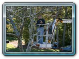 Cherry Picker for the Cherry Tree