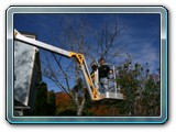 Cherry Picker2